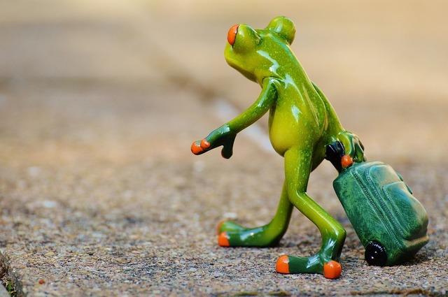 frog-897419_1280.jpg
